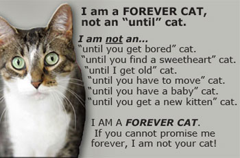 forever cat graphic